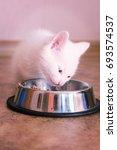 white kitten near a bowl with... | Shutterstock . vector #693574537
