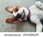 Smile Of Dog