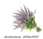mentha spicata  spearmint ... | Shutterstock . vector #693614557