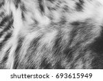 Background Texture Striped Cat...