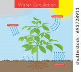 the diagram shows how water... | Shutterstock .eps vector #693728911