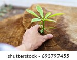 planted with a male hand of new ... | Shutterstock . vector #693797455