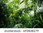 exotic rare lambertii klotzsc... | Shutterstock . vector #693838279