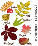 leaves with the names of the... | Shutterstock . vector #693900229