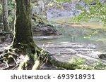 Moss Forest Creek
