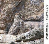 great horned owl  profile  | Shutterstock . vector #693968179