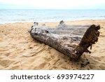 Big Dry Wood Log On The Beach...