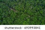Top View Rainforest  Thailand.
