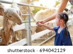 Cute Little Girl Feeding Sheep...