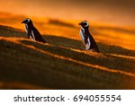 Evening Light With Penguins....