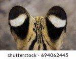 Ears Of Serval Cat