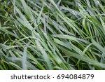green grass with waterdrops... | Shutterstock . vector #694084879