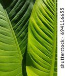 Small photo of green leaf