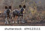 wild dog pups | Shutterstock . vector #694123111