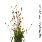 Reeds Isolated On White...
