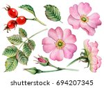 watercolor set of leaves ... | Shutterstock . vector #694207345