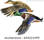 Wild Duck Mallard Watercolor...