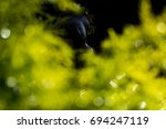 green leaves abstract with...   Shutterstock . vector #694247119