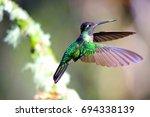 hummingbird | Shutterstock . vector #694338139