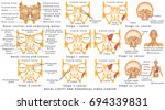 cancer. nasal infections.... | Shutterstock .eps vector #694339831
