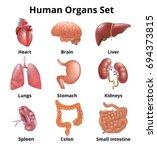 realistic human organs set... | Shutterstock . vector #694373815