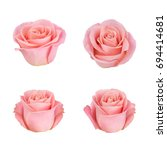Stock photo coral rose flower detailed retouch 694414681