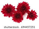 Red Chrysanthemum Flower...