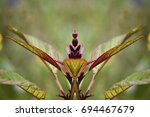 Small photo of Amaranthus Hypochondriacus