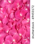 Pink Rose Petals In An Abstract ...