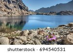Purple Mountain Flowers Pop against the Blue Waters and Rocks of Lake Ingalls in Central Washington State