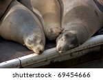 three sea lions are sleeping in ...
