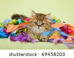 Stock photo chinchilla persian kitten hiding in colorful ribbons on green background 69458203