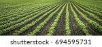 Growing Vegetable Field