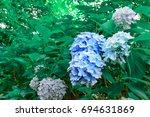 hydrangea | Shutterstock . vector #694631869