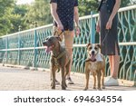 Stock photo staffordshire terriers and their owners at the street male and female persons have a talk on a 694634554