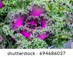 close up view of kale cabbage... | Shutterstock . vector #694686037