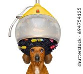 dachshund or sausage  dog  at... | Shutterstock . vector #694754125