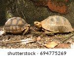 cute portrait of baby tortoise  ... | Shutterstock . vector #694775269