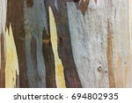 Small photo of Close up Eucalyptus tree bark texture