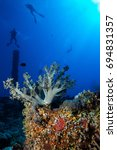 coral garden in the red sea | Shutterstock . vector #694831357