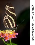 Small photo of Black And Yellow Striped Zebra Longwing Butterfly - Heliconius charitonia