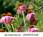 Stock photo monarch butterflies and flowers in garden on bank of the lake ontario in toronto canada august 694959169