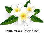 white plumeria  frangiapani  | Shutterstock .eps vector #69496459