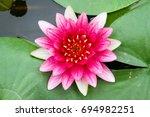 Beautiful Lotus Flower In Pond...