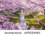 Perfect Cherry Blossoms In Japan