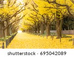 yellow ginkgo trees and yellow... | Shutterstock . vector #695042089