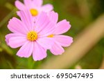 close up macro detail of... | Shutterstock . vector #695047495