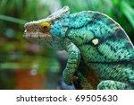 green male chameleon on the tree   Shutterstock . vector #69505630