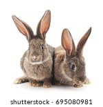Stock photo two rabbits isolated on a white background 695080981