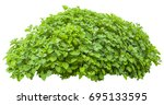 bright green bush isolated on
